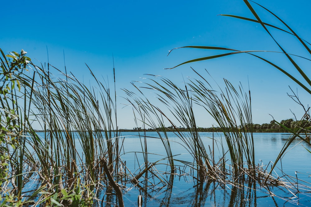 green grass on water under blue sky during daytime