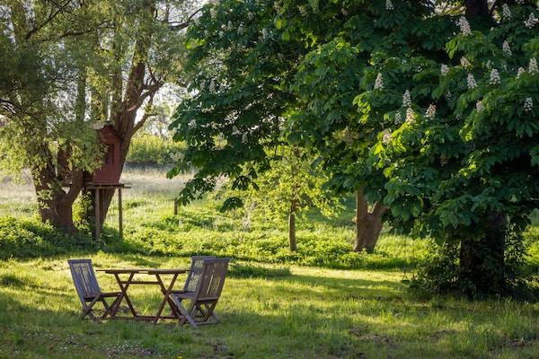 brown wooden bench under green tree during daytime