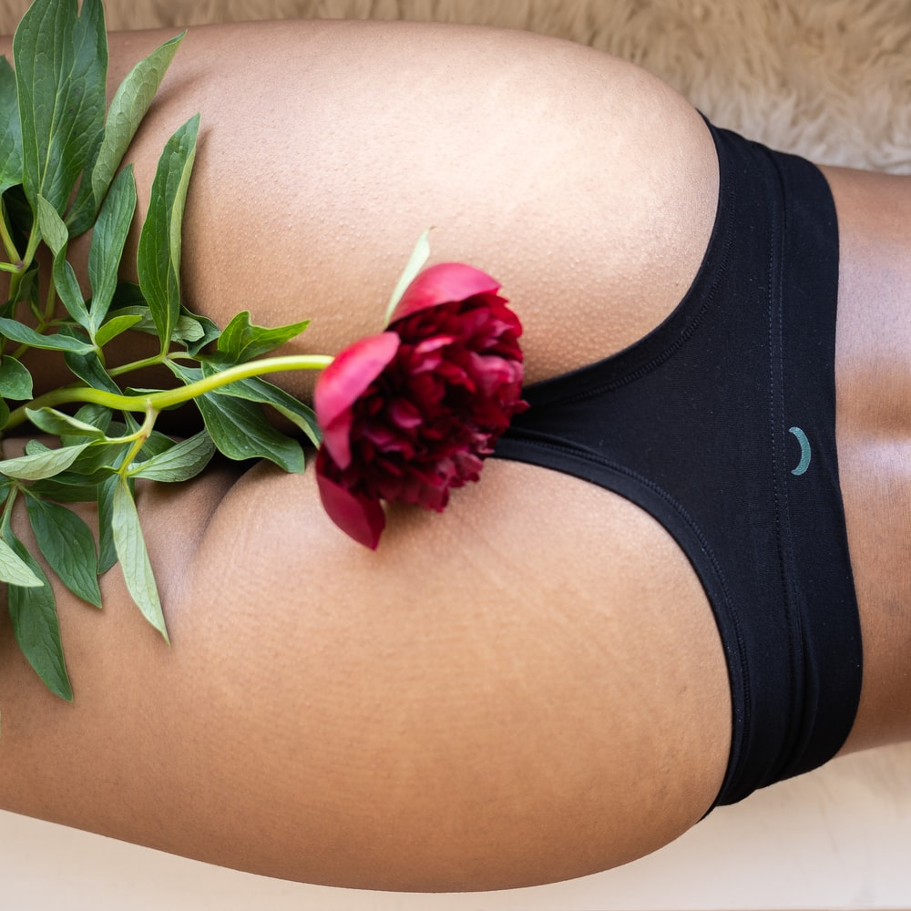 red rose on persons lap