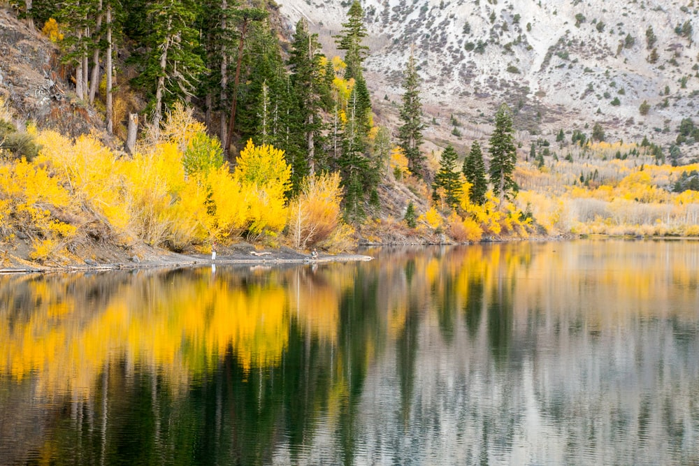 green and yellow trees beside lake during daytime