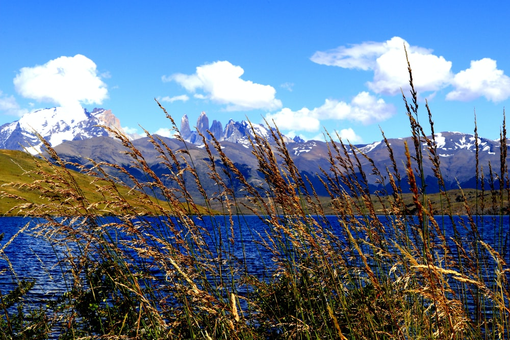 brown grass field near lake under blue sky during daytime