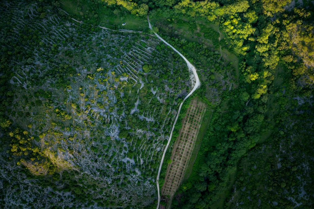 aerial view of green forest and road