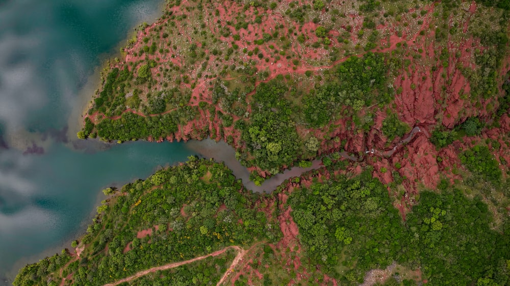 aerial view of green and brown trees