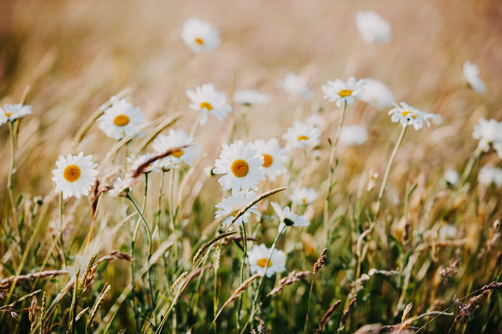 white and yellow flowers on green grass during daytime