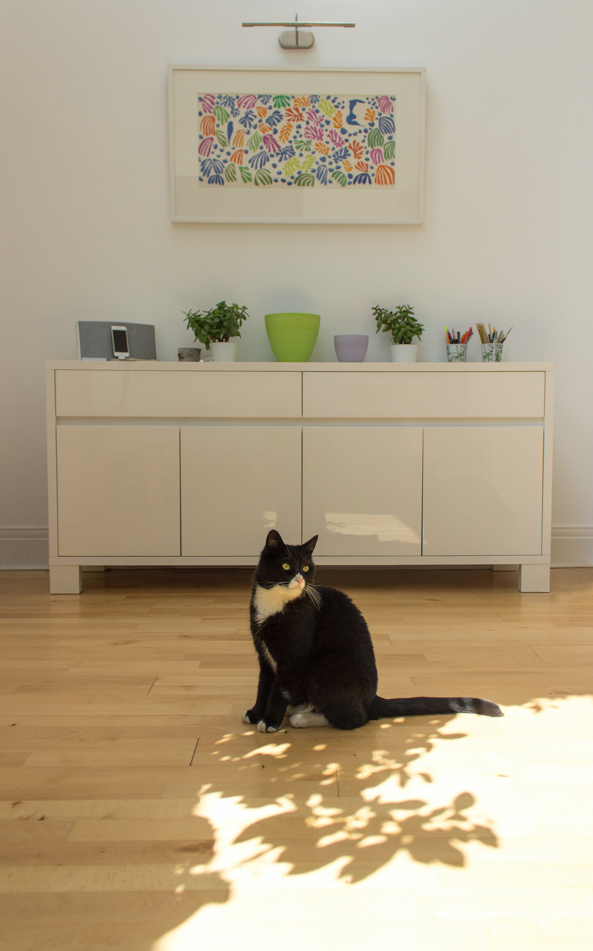 Open plan family room and pet cat