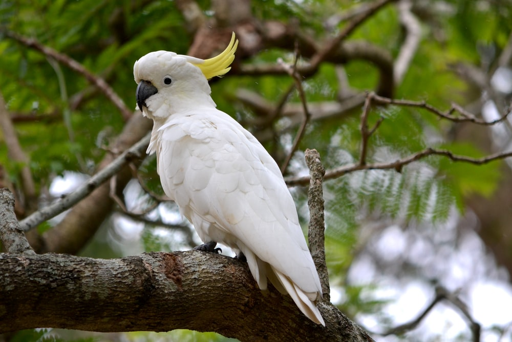 white and yellow bird on brown tree branch