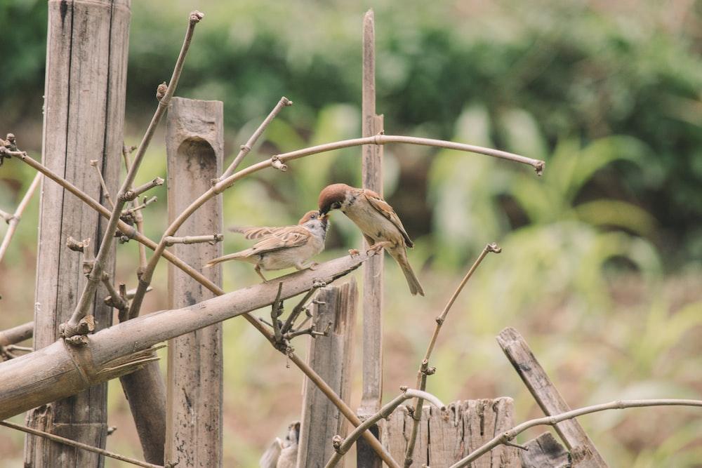 brown bird on brown wooden fence during daytime