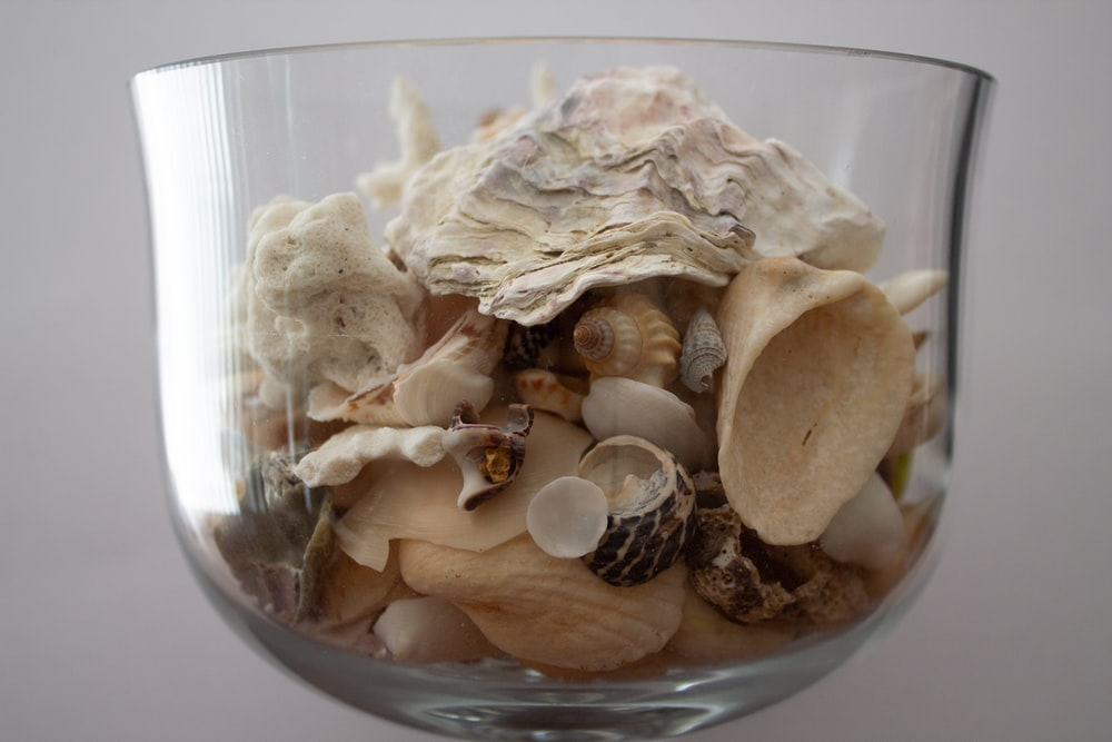 white and brown seashell on clear glass bowl