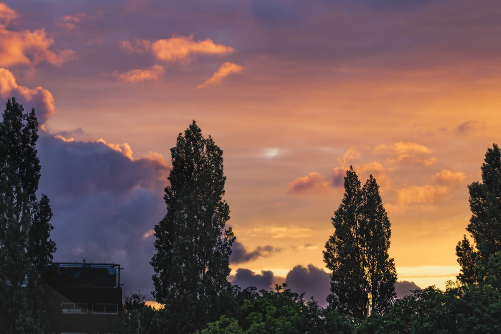green trees under cloudy sky during sunset