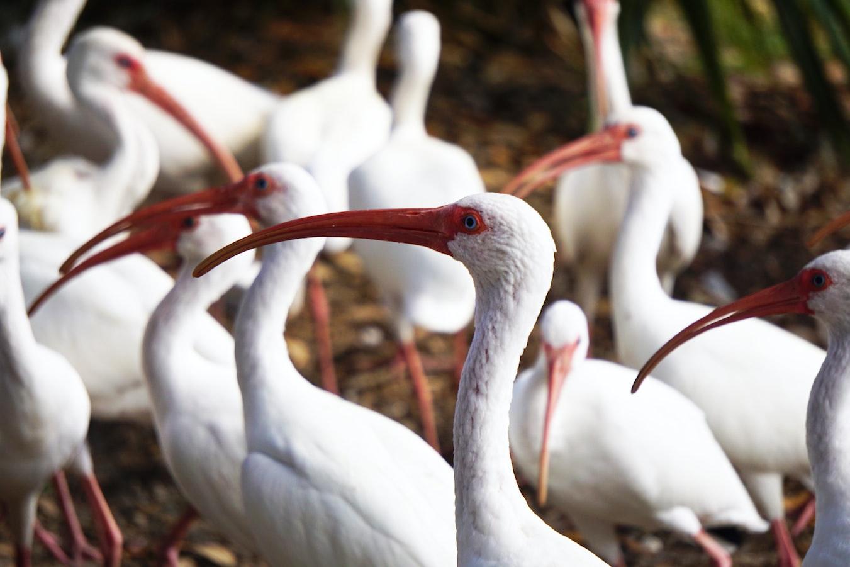a flock of birds in Gainesville, FL