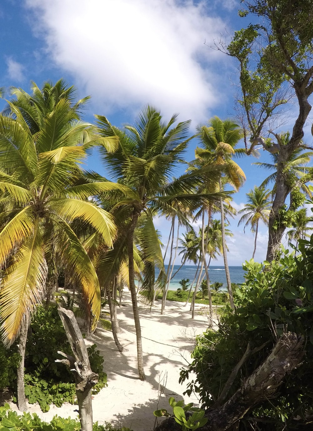 green palm trees on white sand beach during daytime