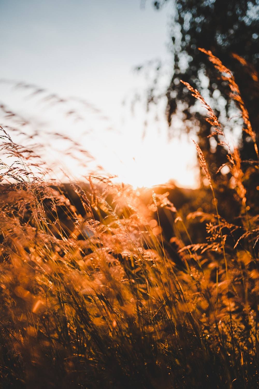 brown grass under white sky during daytime