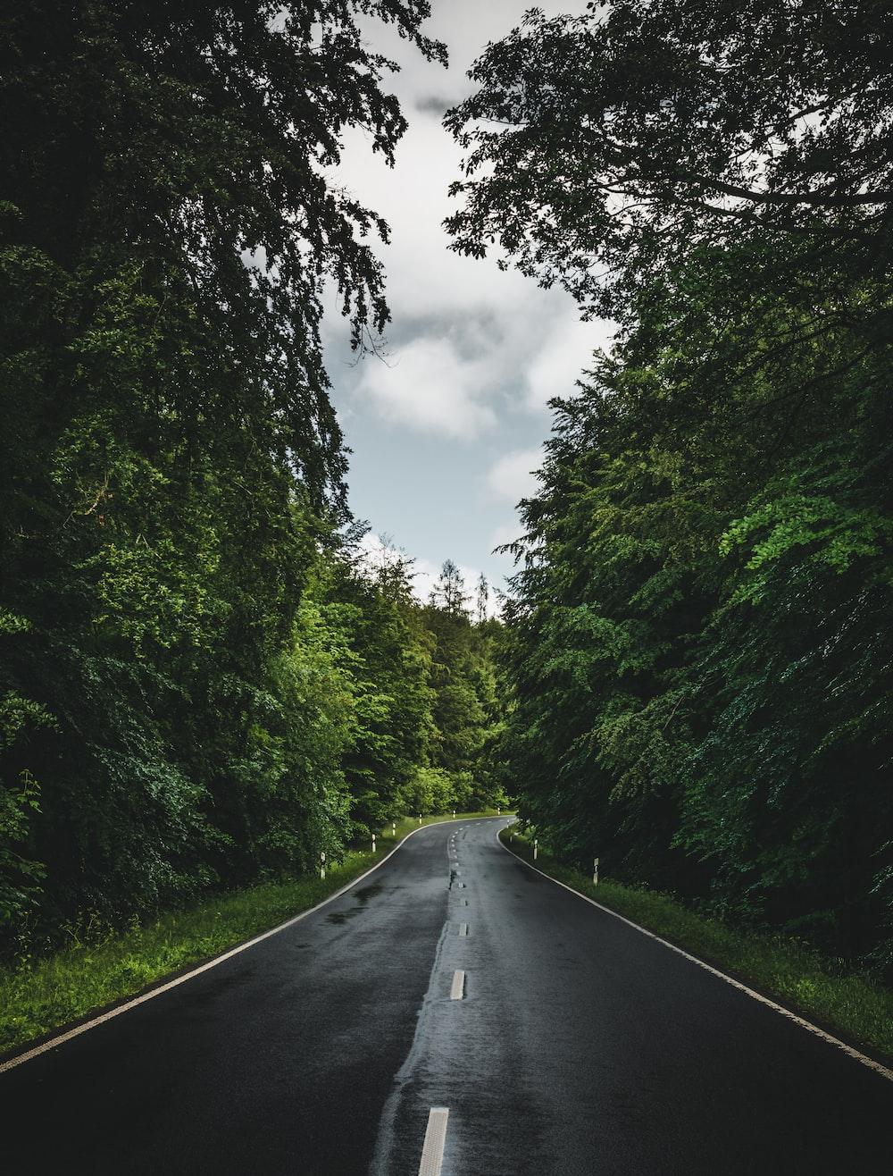 black asphalt road between green trees under white clouds during daytime