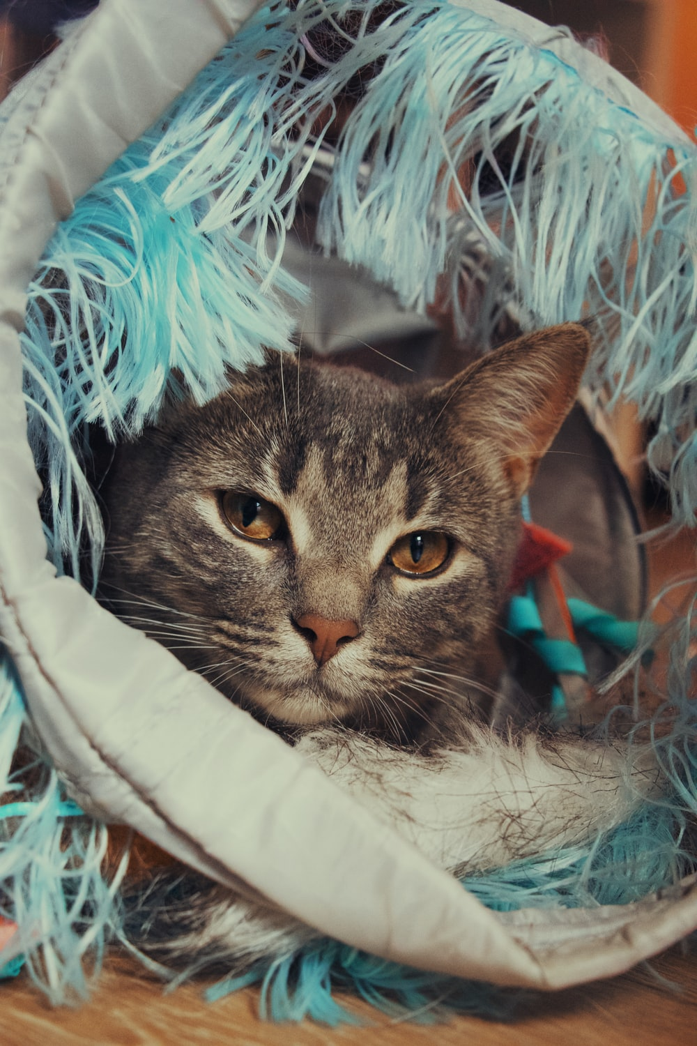 brown tabby cat in white and blue textile