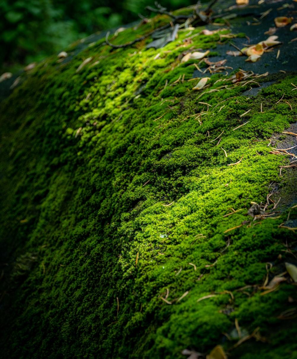 green moss on green grass