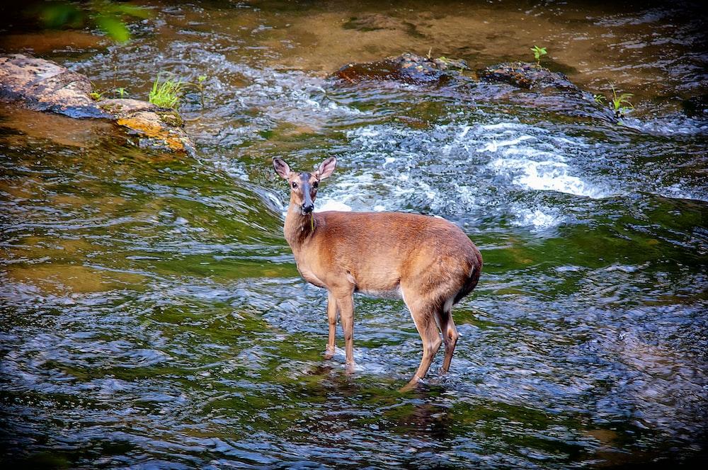 brown deer on water during daytime