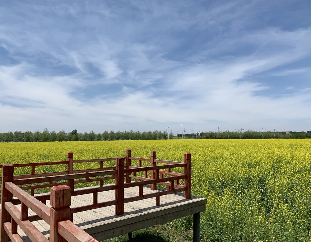brown wooden bench on green grass field under white clouds and blue sky during daytime