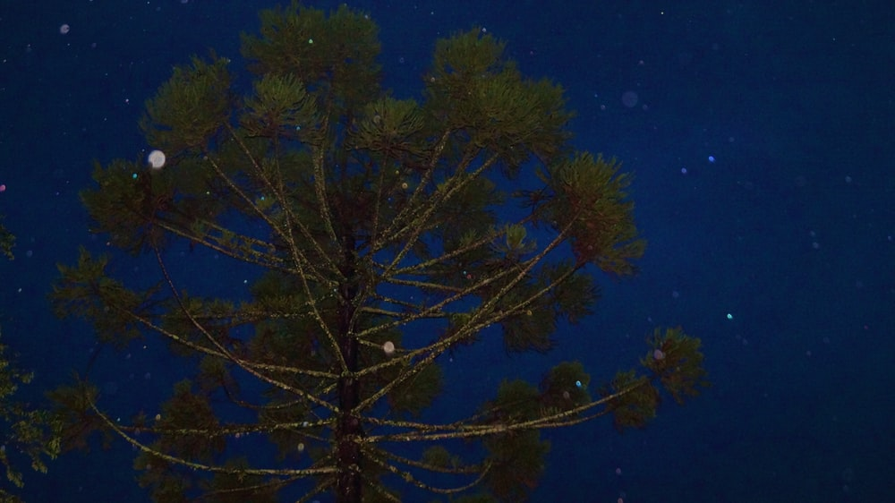 green tree under blue sky during night time