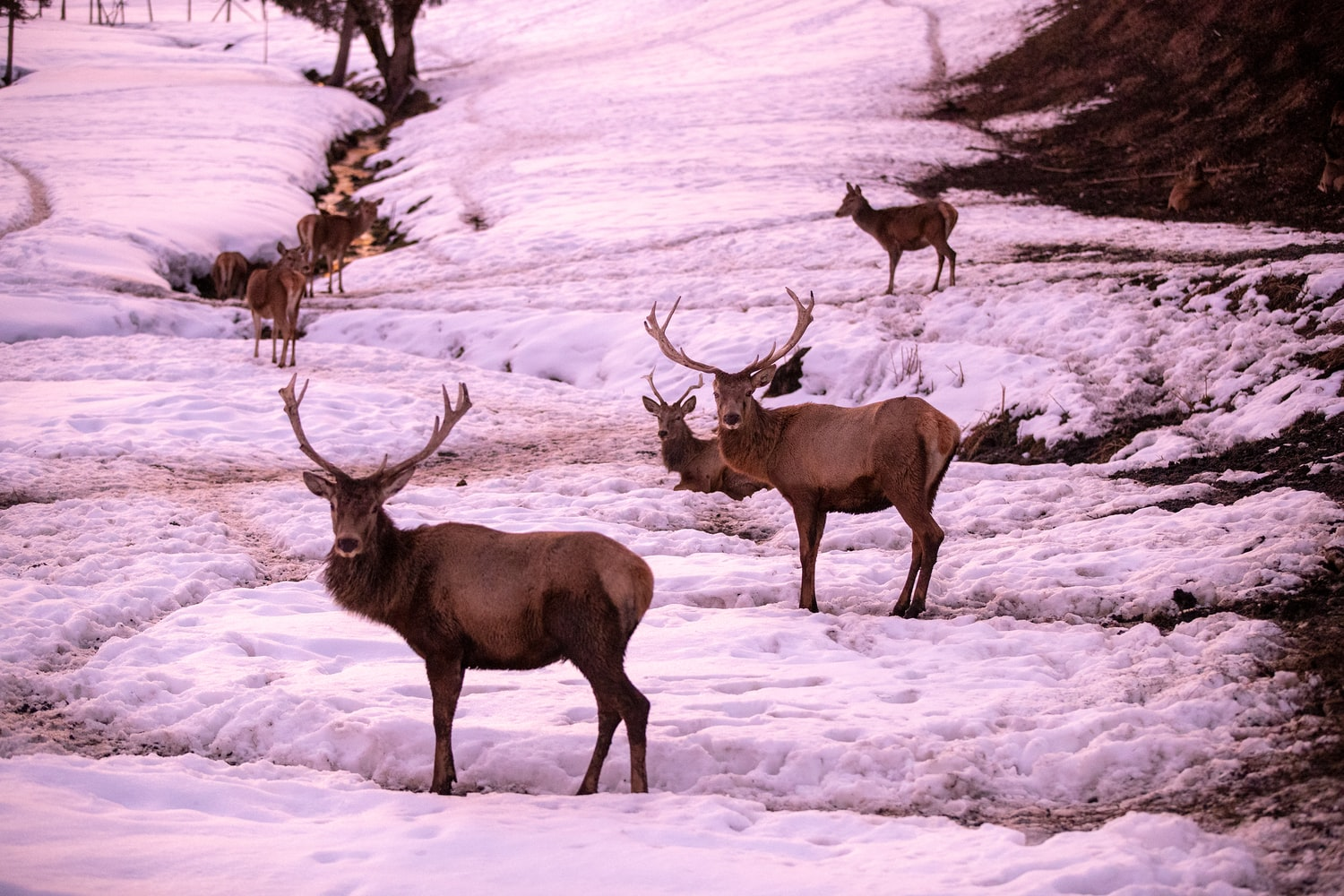 Legislature Strips Game and Fish of Elk Feedground Closure Power