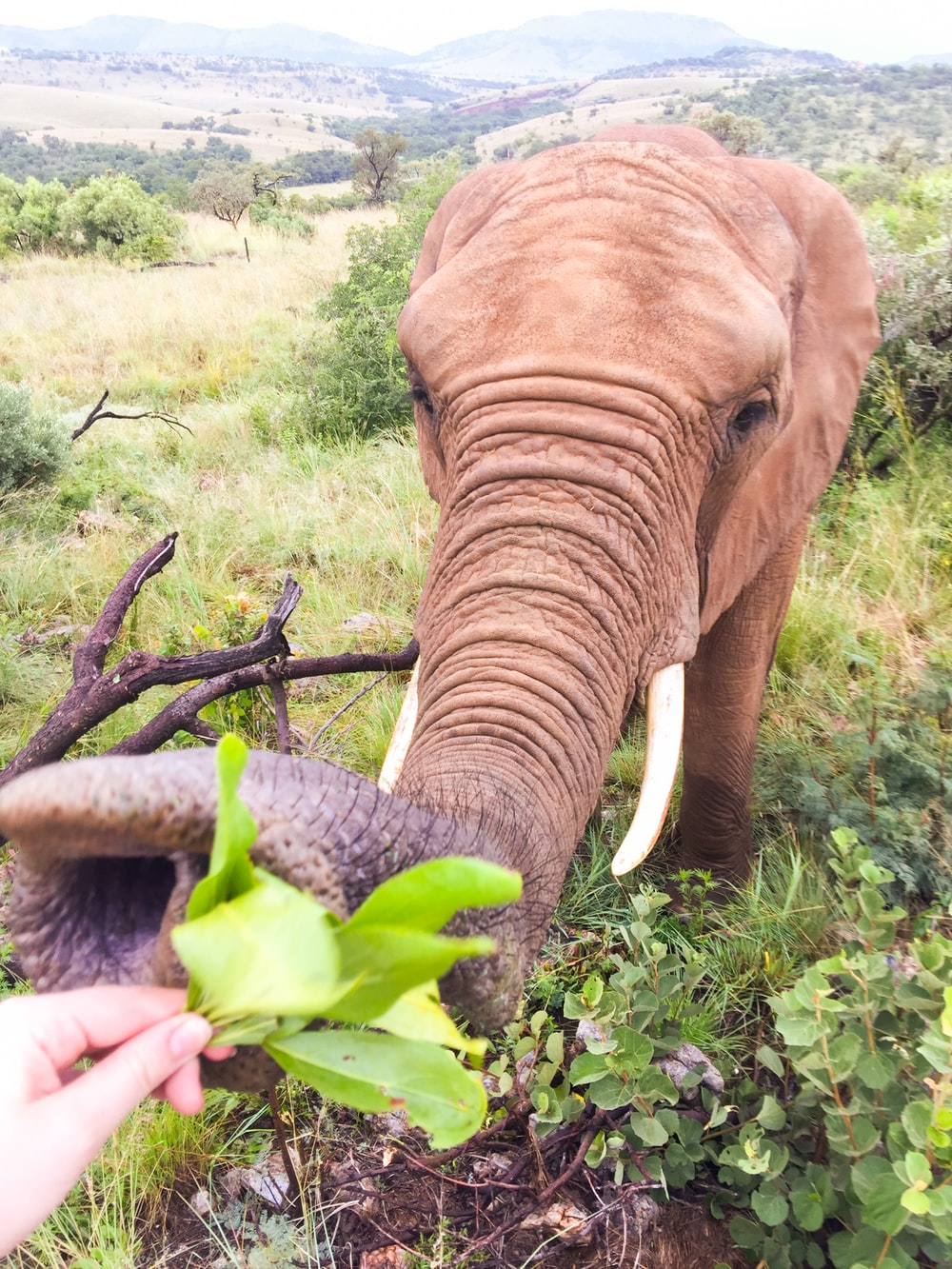 brown elephant eating green plant during daytime