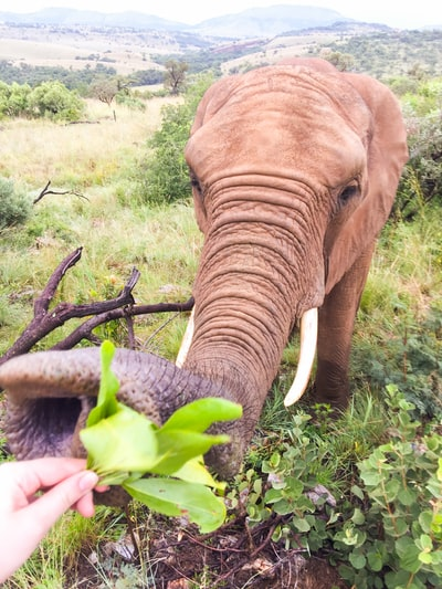 the cutest girl having her greens @ south africa