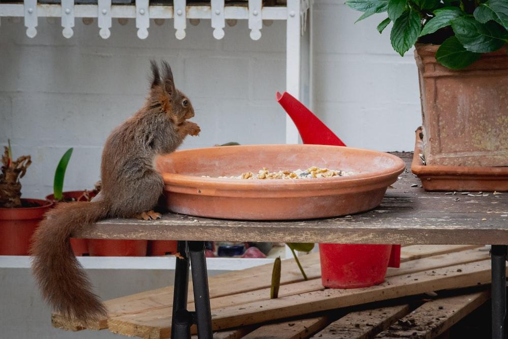 brown rabbit on red plastic basin