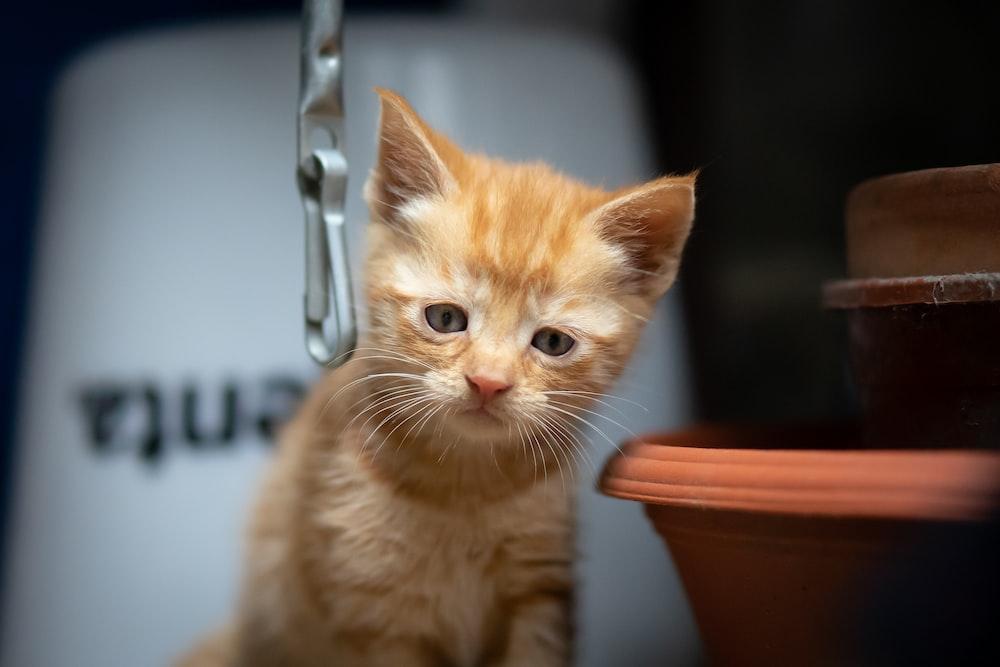 orange tabby cat on brown ceramic bowl