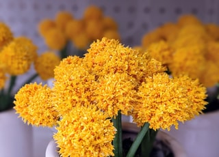 yellow cluster flowers in close up photography