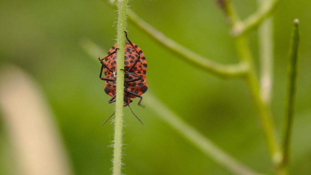 red and black ladybug on green plant stem