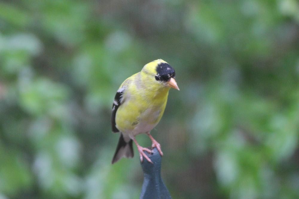 yellow and black bird on tree branch