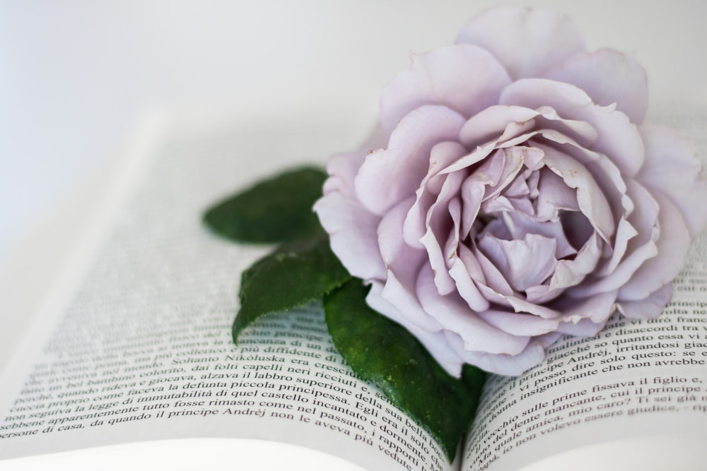 pink flower on book page