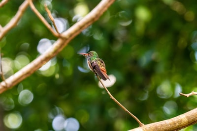 green and black bird on tree branch during daytime belize teams background