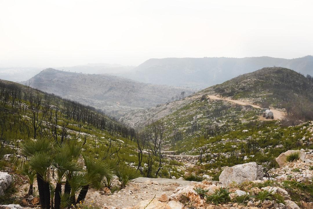 Restos del incendio forestal en El Surar (Llutxent, Valencia).