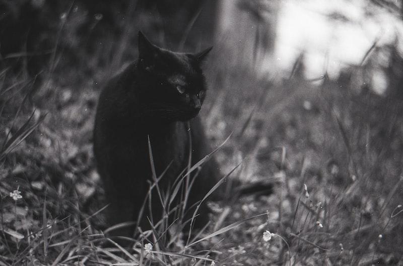 黑貓芭芭I