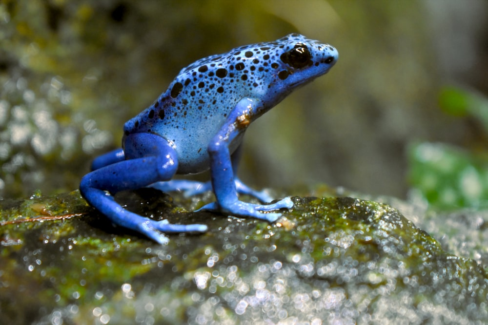 blue and white frog on green moss