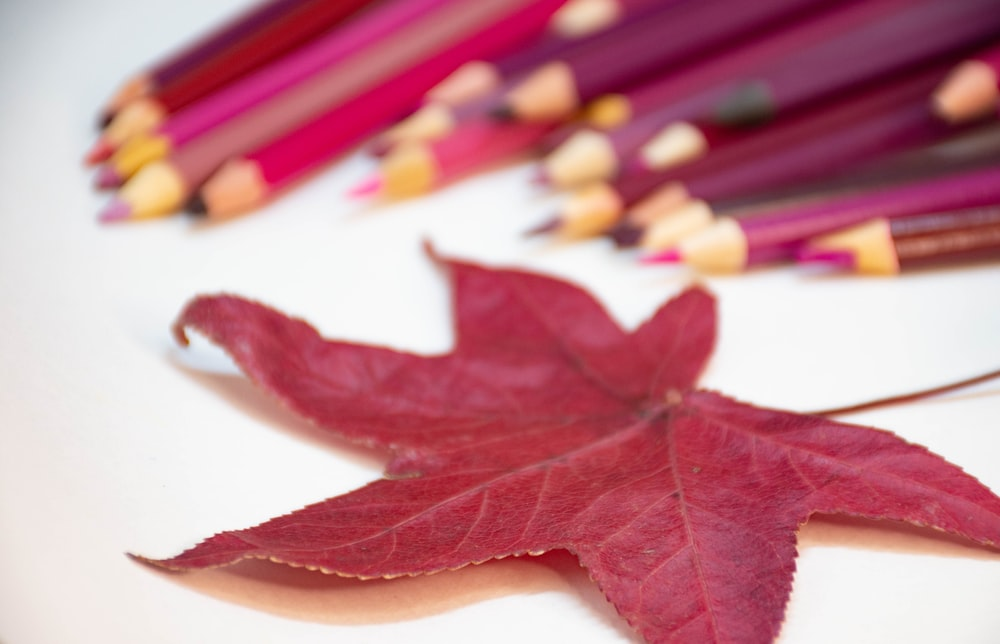 red maple leaf on white table