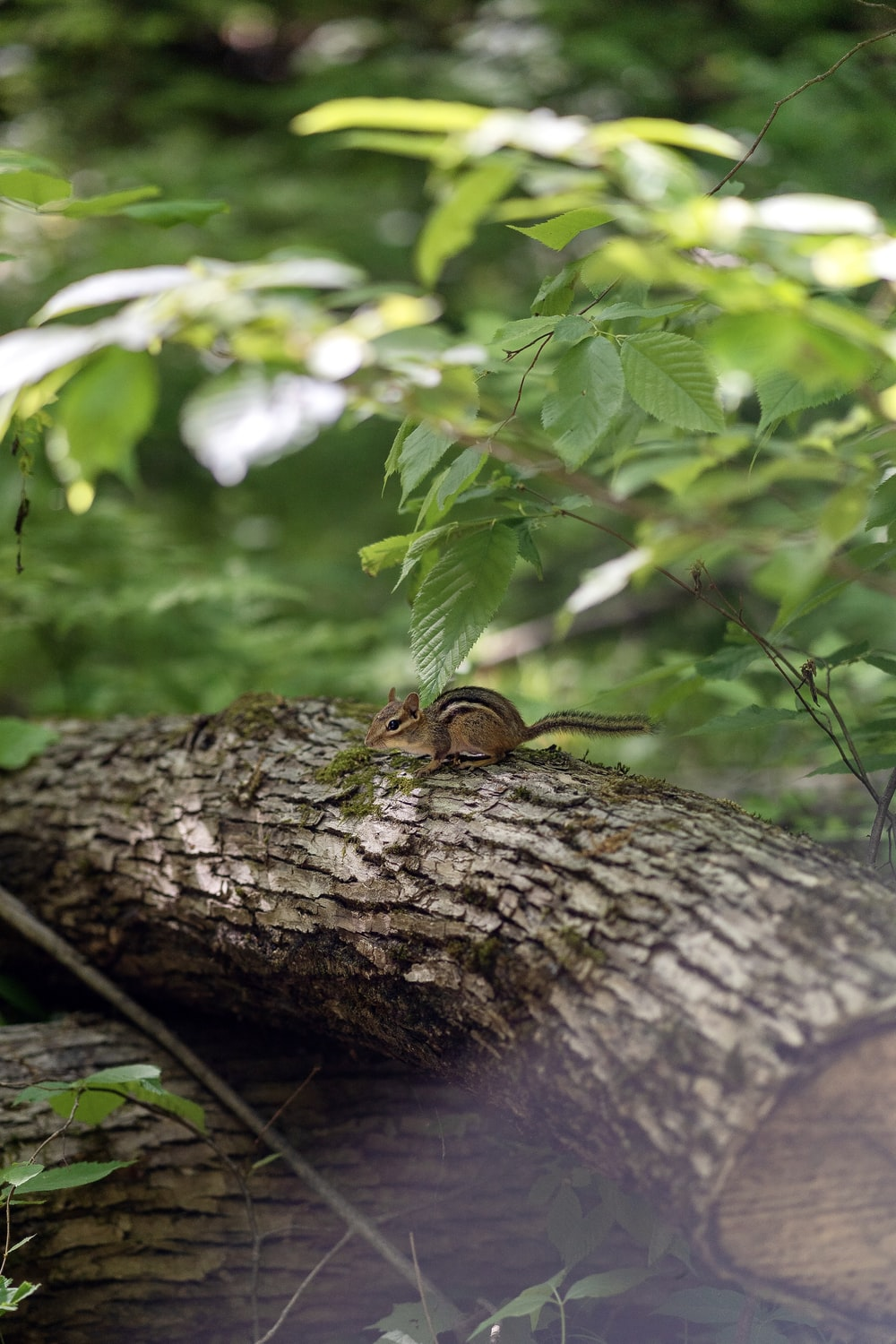 brown and black snake on brown tree trunk