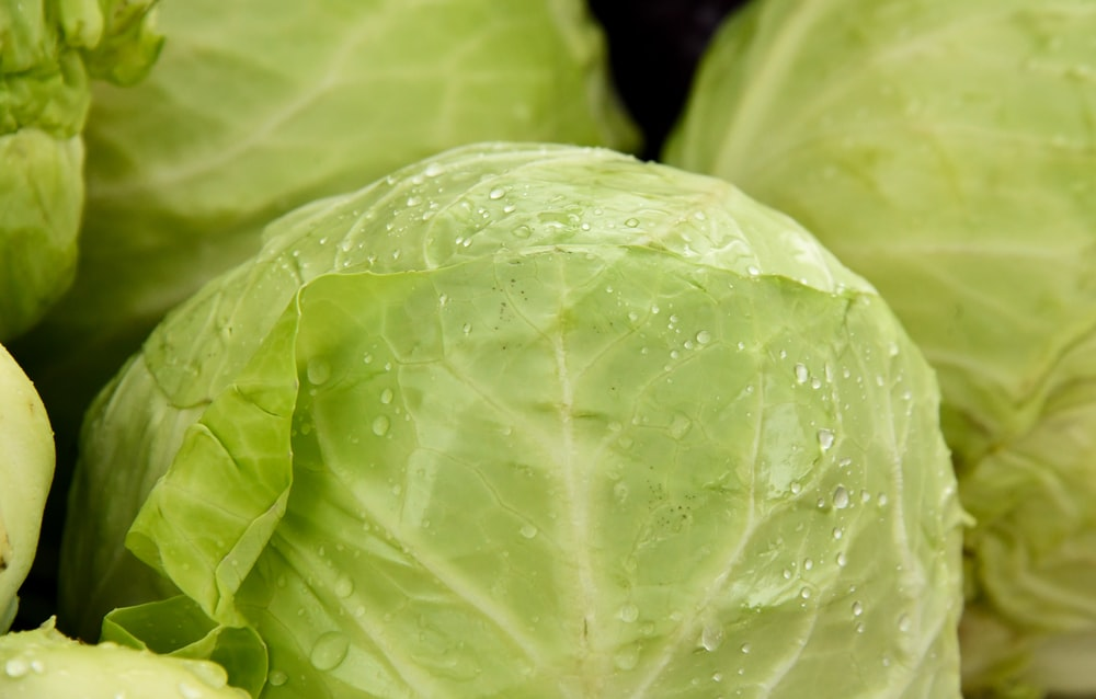 green leaf vegetable in close up photography