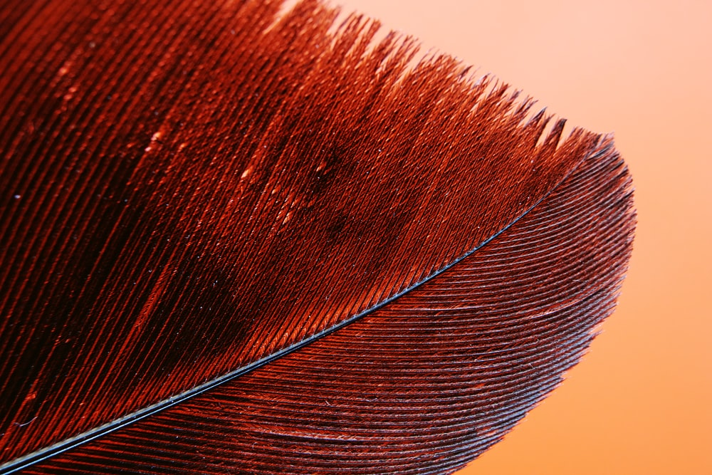 brown and black feather in close up photography