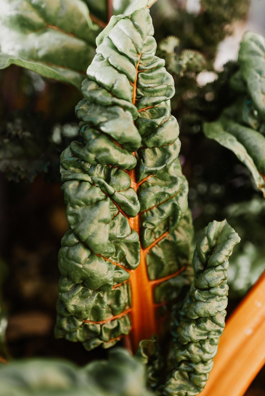 green plant in orange pot