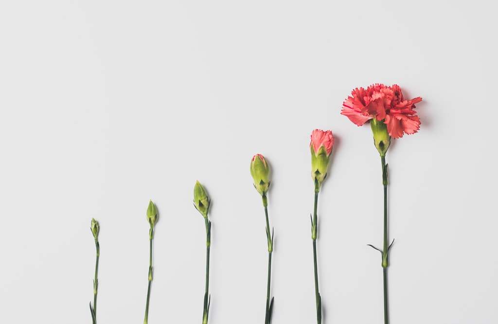 pink flower on white background