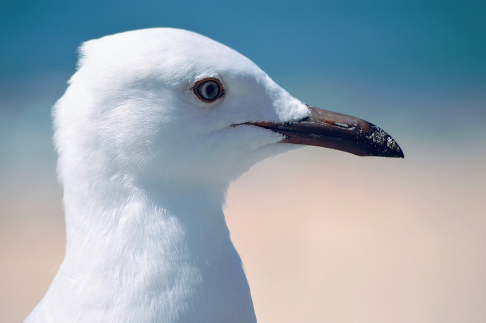 white bird in close up photography