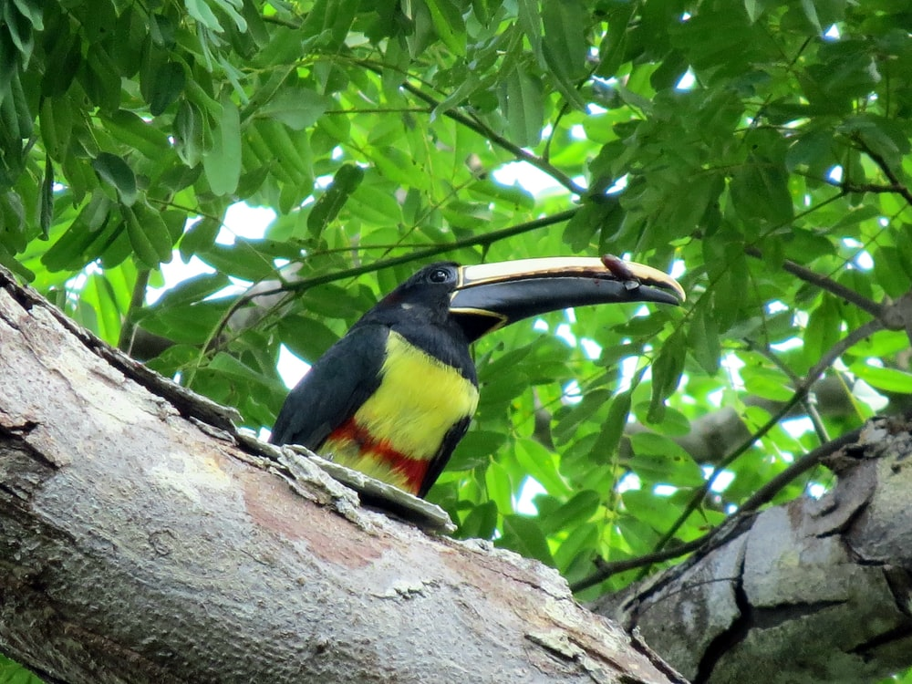 black and yellow bird on tree branch during daytime