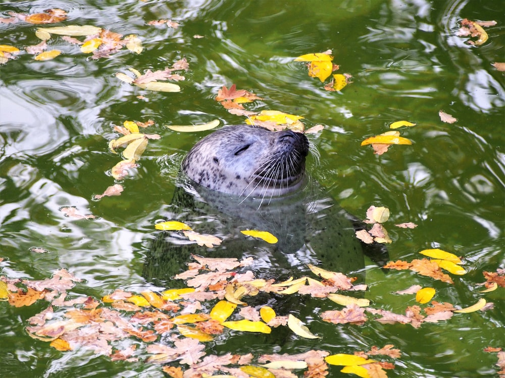 white seal on water with leaves