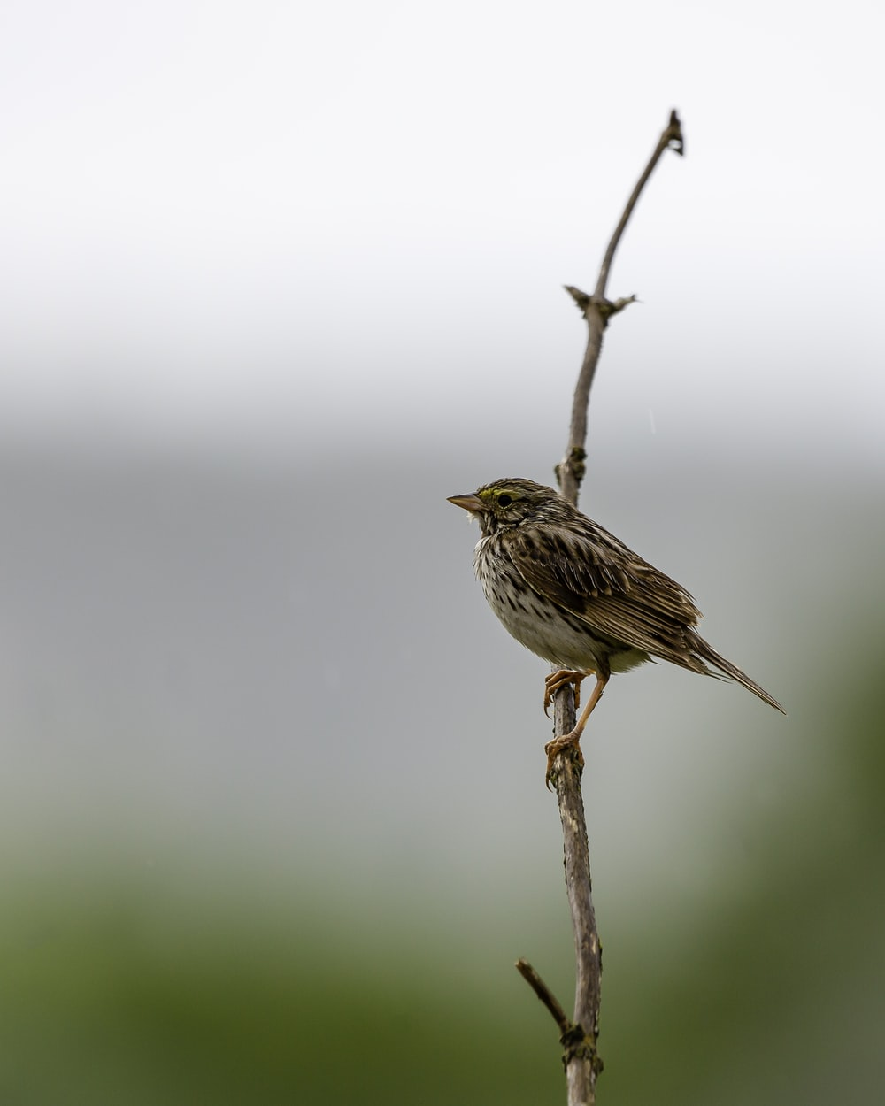 brown bird perched on brown tree branch