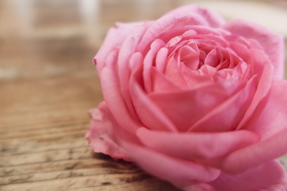 pink rose on brown wooden table