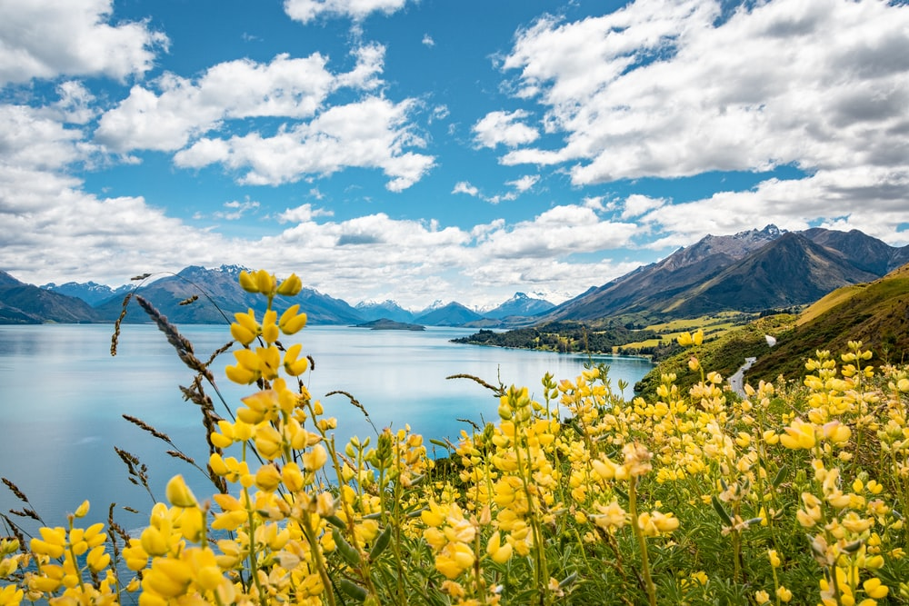 yellow flower field near body of water under blue sky during daytime