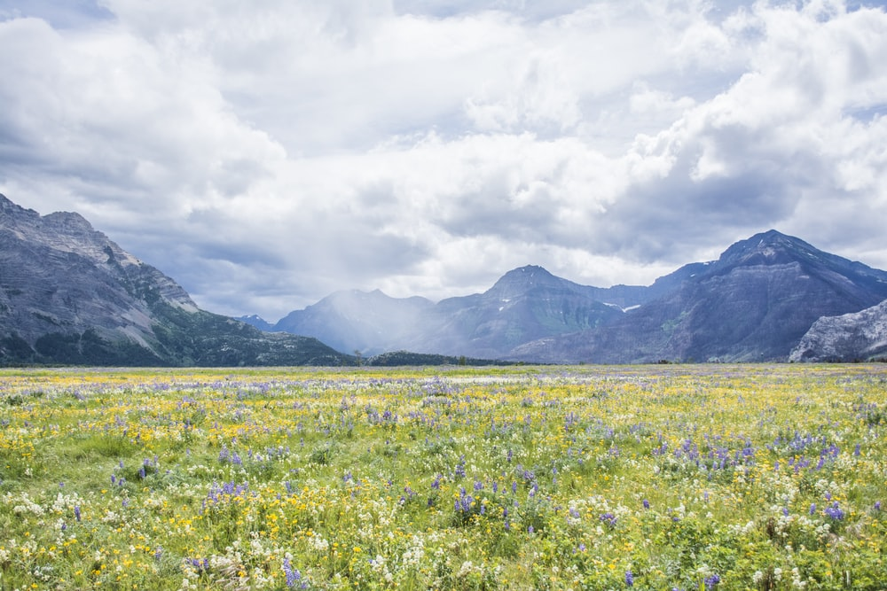 yellow flower field near mountain under white clouds during daytime