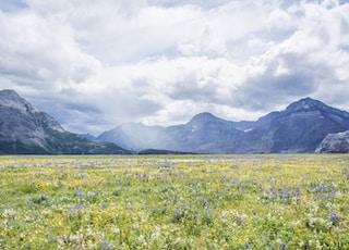 yellow flower field near mountain under white clouds during daytime