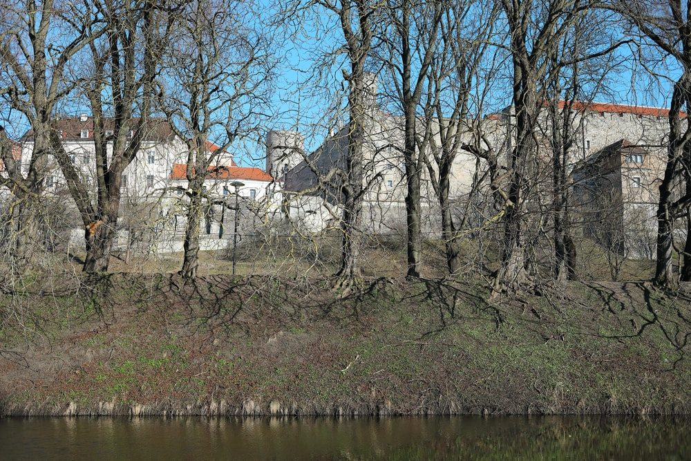 brown bare trees beside river during daytime